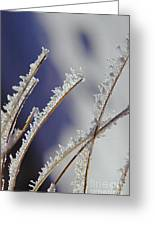 Ice Crystals On Fireweed Fairbanks  Alaska By Pat Hathaway 1969 Greeting Card