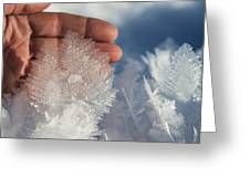 Ice Feathers Greeting Card
