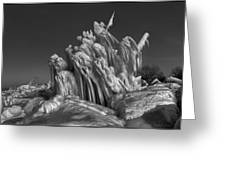 Ice Formation Black And White Greeting Card