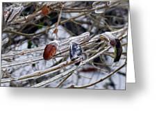 Ice Incased Leaves Greeting Card