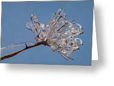 Ice On Stems Greeting Card