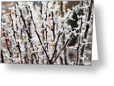 Ice On Thornes Greeting Card