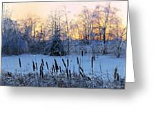 Ice Storm 2013/2 Greeting Card