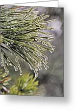 Ice Storm Remnants Vll Greeting Card