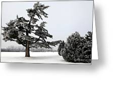 Ice Storm Scenery Greeting Card