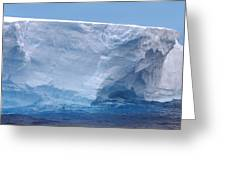 Iceberg With Cape Petrel Greeting Card