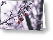 Iced Berries Greeting Card