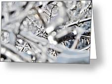 Iced Branches Greeting Card
