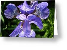 Iced Iris Greeting Card