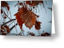Iced Leaves Greeting Card