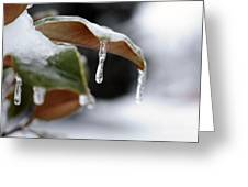 Iced Magnolia Greeting Card