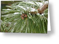 Iced Over Pine Cones Greeting Card
