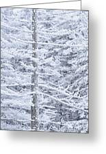 Iced Trees Greeting Card