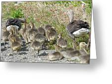 Iceland Duck Family Greeting Card
