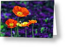 Iceland Poppy Greeting Card