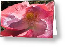 Icelandic Poppy #1 Greeting Card
