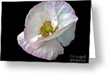 Icelandic Poppy Version Two Greeting Card