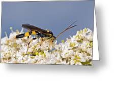 Ichneumon Wasp Feeding On Flowers Greeting Card