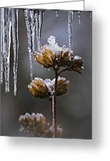Icicles And Ice Flowers Greeting Card