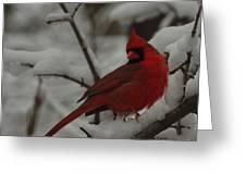 Iconic Avian Greeting Card