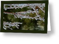 Icy Branch-7482 Greeting Card