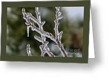 Icy Branch-7485 Greeting Card