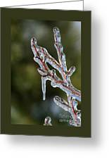 Icy Branch-7498 Greeting Card