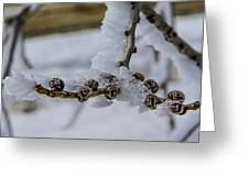 Icy Branch Greeting Card