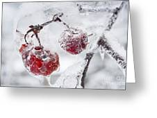 Icy Branch With Crab Apples Greeting Card