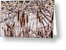 Icy Cattails Greeting Card