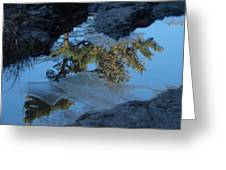 Icy Evergreen Reflection Greeting Card