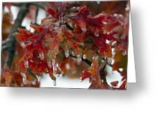 Icy Oak Greeting Card