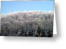 Icy Trees Greeting Card