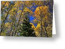 Idaho Autumn Colours Greeting Card