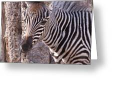 Idaho Falls - Tautphaus Park Zoo Greeting Card