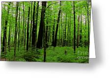If A Tree Fell In The Forest... Greeting Card