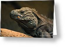 Iguana-7374 Greeting Card