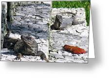 Iguana Bask In The Sun With You Greeting Card