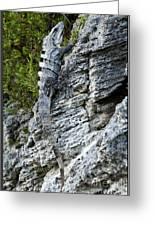Iguana En La Roca Greeting Card