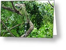 Iguana In A Tree Greeting Card