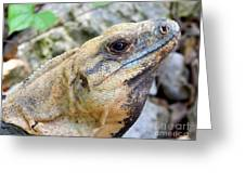 Iguana Of The Uxmal Pyramids In Yucatan Mexico Greeting Card