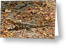 Iguana On A Trail In Manuel Antonio National Preserve-costa Rica Greeting Card