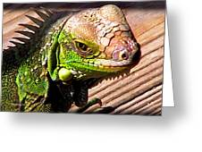 Iguana On The Deck At Mammacitas Greeting Card