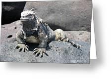Iguana Or Prehistory Survivor Greeting Card