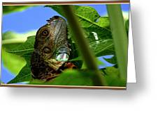 Iguana Tree Greeting Card