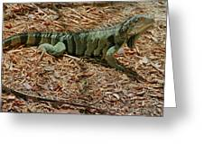 Iguana With A Smile Greeting Card