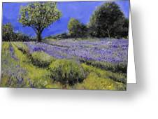 Il Campo Di Lavanda Greeting Card