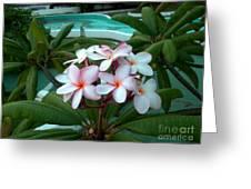 Ilan Ilan Flowers Greeting Card