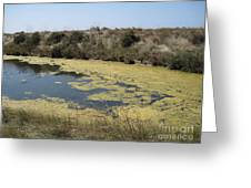 Ile De Re - Marshes Greeting Card