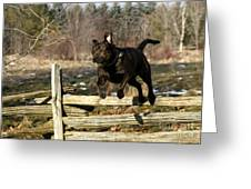 I'll Jump Over Fences For You Greeting Card